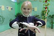 Выставка экзотических бабочек открылась в Иркутске