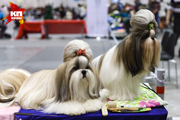 В Новосибирске прошла Международная выставка собак «Сибирь - XXI век»