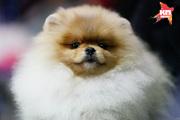 В Ставрополе прошла международная выставка собак