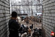 Собачий приют «Дора» в Воронеже