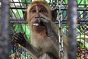 Выставка-зооопарк «Мир обезьян и попугаев» в 130 кварте Иркутска
