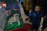 В Новосибирске прошла выставка кошек
