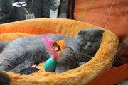 Чемпионат кошек в Благовещенске