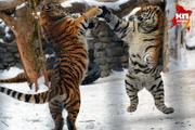 Весна в Новосибирском зоопарке. Март 2015