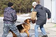 Вакансии для четвероногих открыты в кинологической службе Иркутска