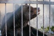 В Казани в зоопарке проснулась Маша и медведи