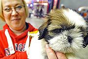 В «Крокус Экспо» прошла крупнейшая выставка собак в России «Евразия 2015»