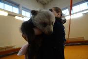 В цирке приютили двух мишек-сирот, которые едва не погибли в лесу