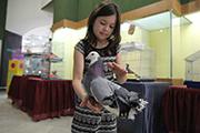 Выставка декоративных голубей,попугаев , канареек и певчих птиц в Иркутске