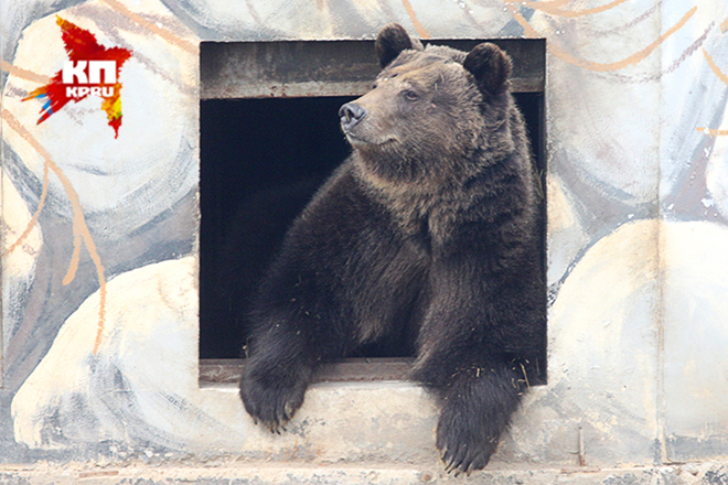 Ярославском зоопарке после