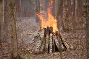 Спасатели устроили пожар в Сестрорецке: «выгорело» десять гектаров леса