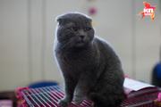 В Ставрополе прошла международная выставка кошек