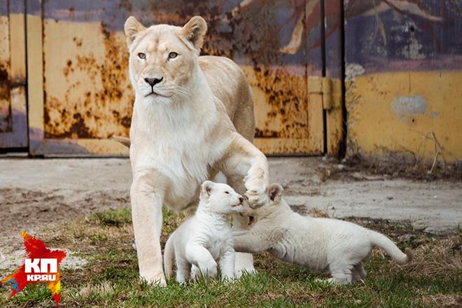 В Ярославском зоопарке