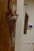 В ВГУ открылся анатомический музей. в котором экспонаты можно потрогать руками