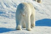 Журналисты «Комсомолки» приняли участие в эвакуации полярников в Арктике
