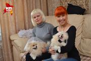 В Новосибирске прошла собачья свадьба