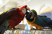 Выставка птиц в Иркутске