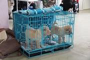Выставка собак в Казани 15.11.15