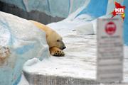 Обитатели Новосибирского зоопарка готовятся к зимней спячке