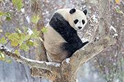 Этот снимок сделан в китайском городе Цзинань
