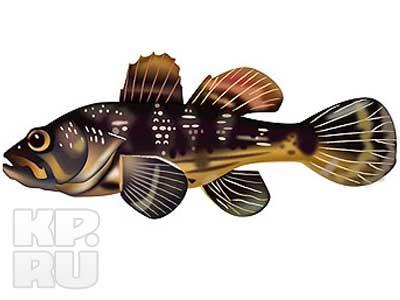 Фото 8 из 19.  Плотва Где какую рыбку ловить, когда и на что.
