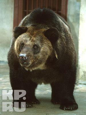 В Екатеринбургском зоопарке сегодня проснулись гималайские медведи.  ФОТО.