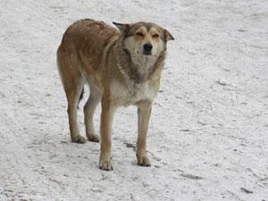 Про собаку Найду.