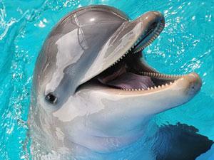 Такое уникальное свойство дельфинов обнаружили ученые, работающие в...