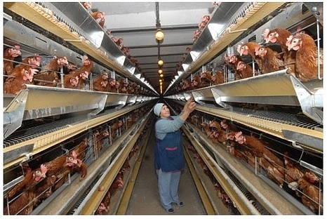 Житель Кубани ограбил птицефабрику.