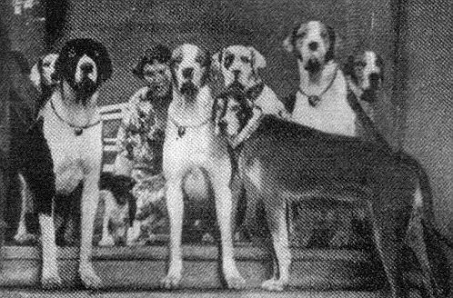 Гитлер планировал выиграть войну с помощью говорящих собак