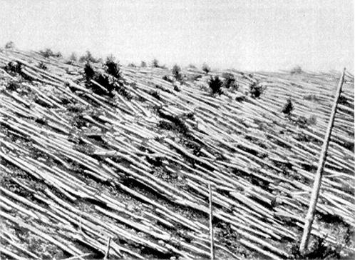 Вывал леса в рйаоне эпицентра, сфотографированный во время экспедиции Кулика