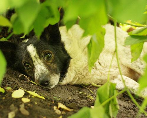 Пес преданно ждет хозяев.