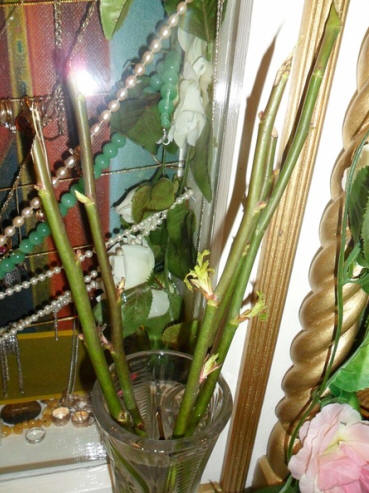 Рассадили засохшие розы в землю и молятся о том, чтобы благословенные растения начали цвести. Фото: syktyvkar.eparchia.ru