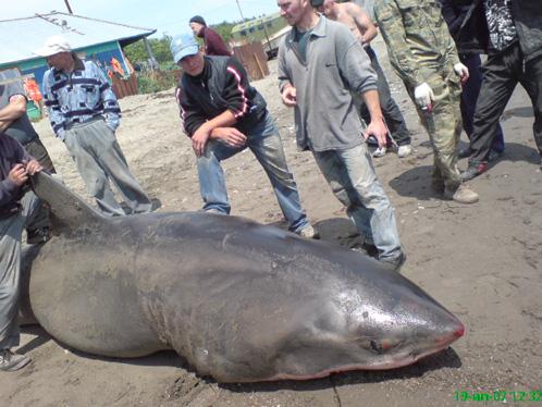 И это неудивительно.  Акулы входят в высшую лигу хищников.