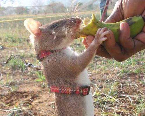 И у крысы есть душа?!