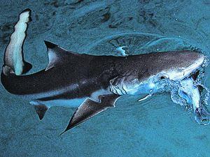 У аквариумов с акулами, несомненно, всегда будут толпы зевак.