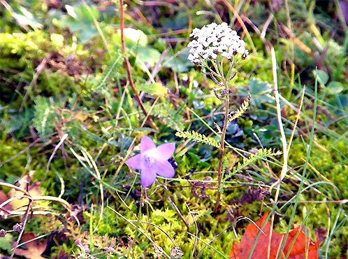 В Эстонии также продолжают цвести летние цветы.