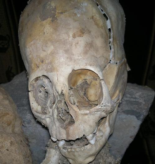 Высота черепа 50 сантиметров. Остальное тело - тоже 50 сантиметров. Все существо, стало быть, метр?