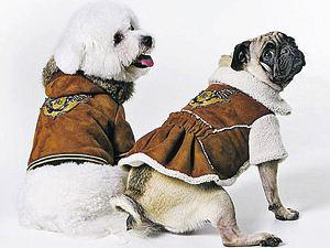 Новая коллекция одежды для собак от Roberto Cavalli.