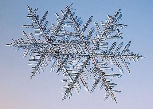 Эта снежинка имеет  так много ответвлений,  что выглядит как папоротник.