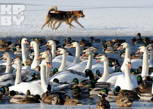 Главными условиями для зимующих птиц...