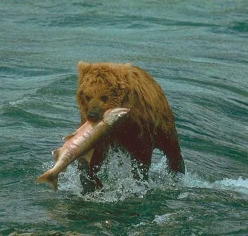 Медведь и его обед Медведи Дикие Животные МИР ФОТО.