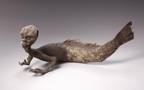 Самец русалки - тоже из англлийского музея. Его исследуют следующим