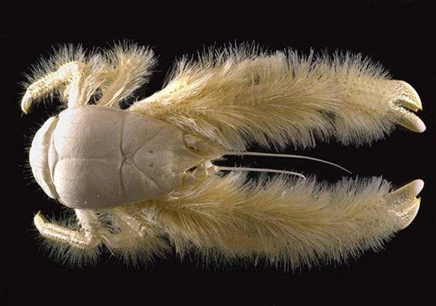 Вот таких малявок устрашающего вида нашли при переписи морской живности.