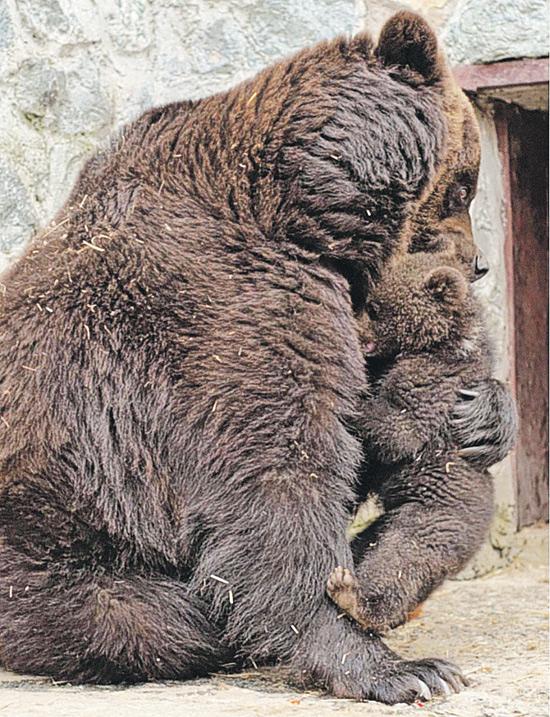 И мама все простит - куда же она денется. Даже если мама - громадная медведица.