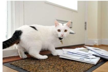 Английская кошка прогнала почтальонов
