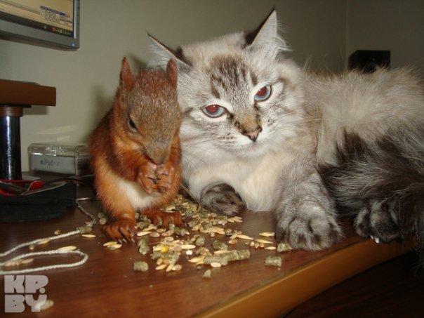 Масик найдет общий язык со всеми, даже с кошкой