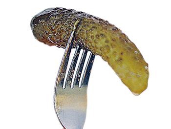 Обычно после начала любой антиалкогольной кампании на смену водке приходил «первач». И только соленому огурчику, как закуске, не было альтернативы.