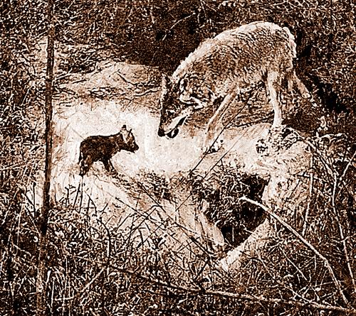 Волчонок должен был спрятаться. Фото С. КУРЯТИНОАВА с выставки «Золотая черепаха».