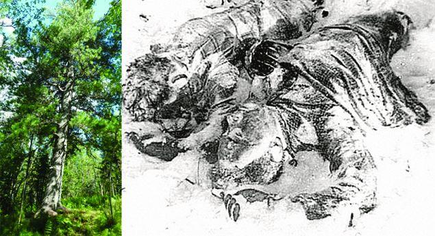 Книгу о Перевале Дятлова можно